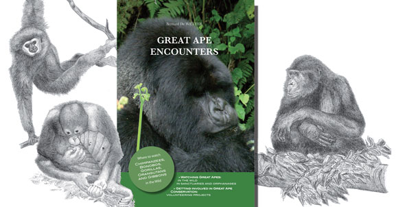Great Ape Encounters